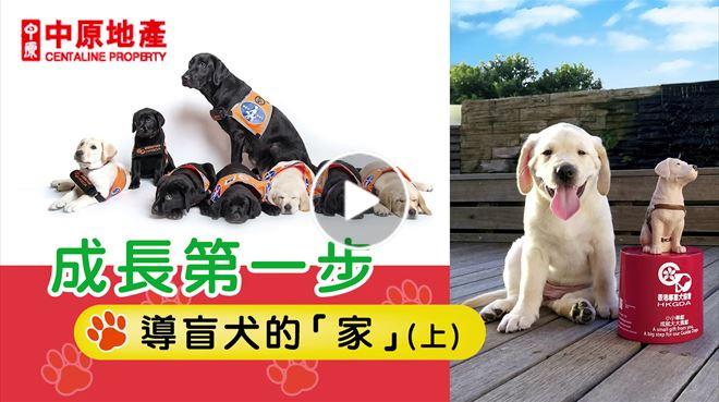 成長第一步 導盲犬的家 (上)