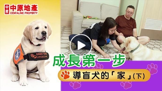 成長第一步 導盲犬的家 (下)